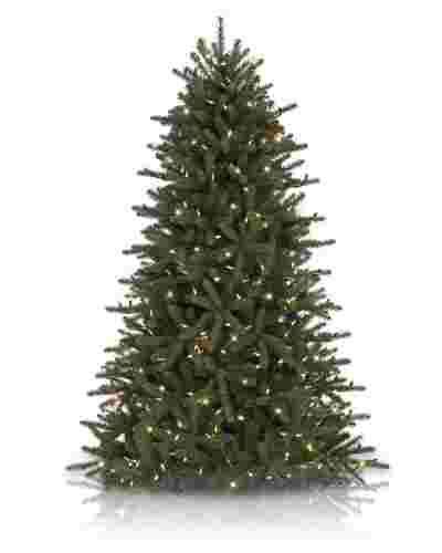 Grandview Fir From £99
