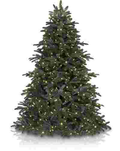 Nordmann Fir From £119
